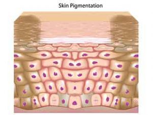 Brown skin marks pigments