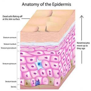 epidermis 3d Photofacials offer benefits for skin
