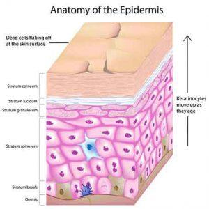 Eepidermis 3d Photofacials offer benefits for skin, eMatrix Sublative technology, Sublative fractional skin treatments, Skin rejuvenation, Photofacial, fotofacial, rejuvenation, Restore volume, Stimulate collagen, Sun damaged skin, Dark Spots, age spots,